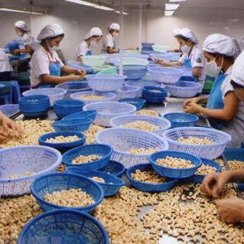 Cashew exports are under threat